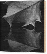 Holly Leaf Wood Print