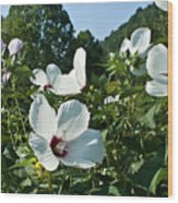 Hollyhock At Sunrise Wood Print