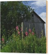 Hollyhock Barn Wood Print