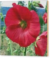 Hollyhock Hill Wood Print