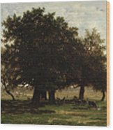 Holm Oaks Wood Print