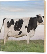 Holstein Dairy Cow Wood Print
