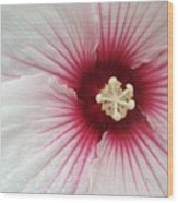 Holy Hibiscus Wood Print