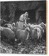 Holy Land: Shepherd, C1910 Wood Print