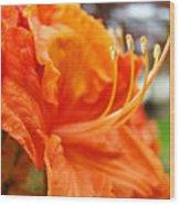 Home Decor Orange Rhodie Flower Art Print Baslee Troutman Wood Print