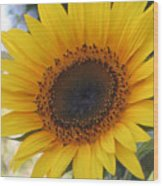 Homegrown Sunflower Wood Print