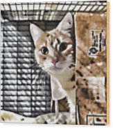 Homeless Cat Wood Print