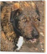 Homeless Dog Charlick Wood Print