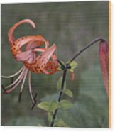 Homestead Tiger Lilly Wood Print