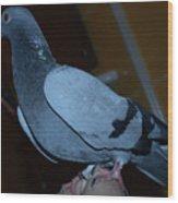 Homing Pigeon Wood Print