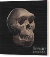 Homo Habilis Skull Wood Print