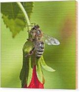 Honey Bee 11 Wood Print