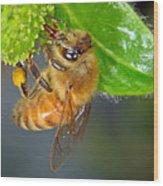 Honeybee Wood Print