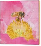 Honey Bee Collecting Pollen Wood Print