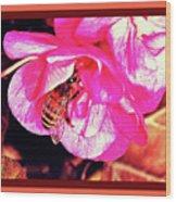 Honey Bee In A Pink Flower Wood Print