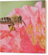 Honey Bee In Flight Wood Print