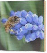 Honey Bee On Blue Flowers Wood Print