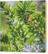 Honey Bee On Bush Wood Print