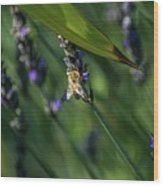 Honey Bee On Flower #4 Wood Print