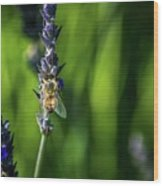 Honey Bee On Flower #5 Wood Print