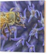 Honey Bee On Globe Allium Wood Print