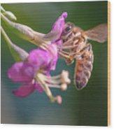 Honey Bee On Goji Berry Flower Wood Print