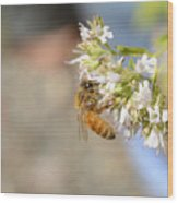 Honey Bee On Herb Flowers Wood Print