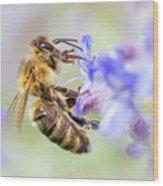 Honey bee on Russian Sage Wood Print