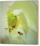 Honey Bees And Magnolia II Wood Print