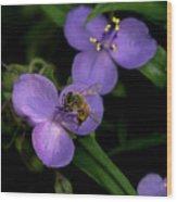 Honey Hunter Wood Print