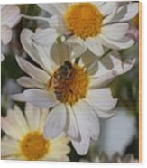Honeybee And Daisy Mums Wood Print
