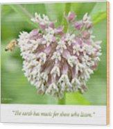 Honeybee And Milkweed Flowers Wood Print