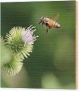 Honeybee Flying To Thistle  Wood Print