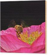 Honeybee In Flight 010 Wood Print