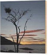 Honeymoon Bay - Tasmania Wood Print