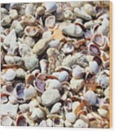 Honeymoon Island Shells Wood Print