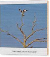 Honeymoon Osprey Wood Print