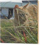 Honeysuckle Cat Hunting Wood Print
