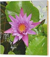 Honolulu Water Lily Wood Print