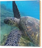 Honu Hello Wood Print