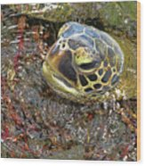 Honu In The Water Wood Print