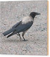 Hooded Crow Wood Print