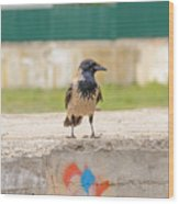 Hooded Crow On A Wall Wood Print