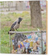 Hooded Crow With Garbage Wood Print