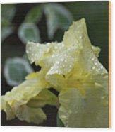 Hooded Iris Wood Print