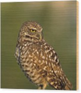 Hoot A Burrowing Owl Portrait Wood Print