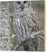 Hoot Hoot Hoot Are You Wood Print by Beve Brown-Clark Photography