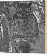 Hootie Owl  Wood Print