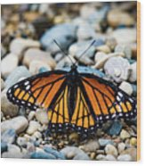 Hope Of The Monarch Butterfly Wood Print
