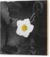 Hope Tucked Away In The Petals  Wood Print